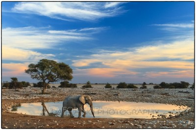 Namibia - Etosha - Canon EOS  7D / EF 24-70mm f/2.8 L USM