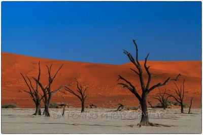 Namibia - Sossusvlei area - Deadvlei - Canon EOS  7D / EF 70-200mm  f/2.8 L IS II USM