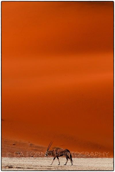 Namibia - Sossusvlei area - Deadvlei - Oryx (Oryx gazella) - Canon EOS  7D / EF 70-200mm  f/2.8 L IS II USM