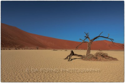 Namibia - Sossusvlei area -Deadvlei - Canon EOS  5D III / EF 24-70mm  f/2.8 L USM