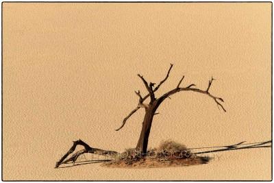 Namibia - Sossusvlei area - Deadvlei - Canon EOS  7D / EF 70-200mm  f/2.8 L IS II USM + 2.0x III
