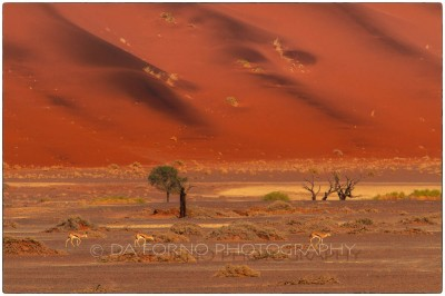 Namibia - Sossusvlei area - Canon EOS  7D / EF 70-200mm  f/2.8 L IS II USM + 2.0x III