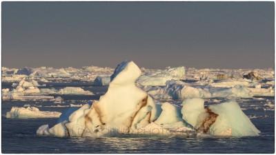 Svalbard - Austfonna - Canon EOS  7D II / EF 400mm f/2.8 L IS II USM