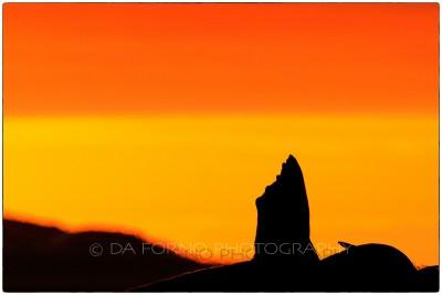 Svalbard - Moffen - Walrus (Odobenus rosmarus) - Canon EOS  7D II / EF 400mm f/2.8 L IS II USM