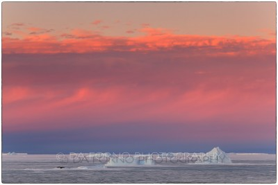 Antarctica - Iceberg - Canon EOS 5D II / EF 100mm f/2.8 L Macro IS USM