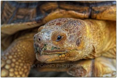 Miami - Everglades - Turtle - Canon EOS 7D - EF 70-200mm f/2,8 L IS II USM +1,4x