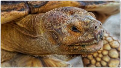 Miami - Everglades - Turtle - Canon EOS 7D - EF 70-200mm f/2,8 L IS II USM + 1,4x