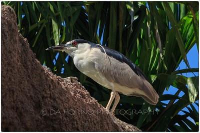 Miami - SeaWorld garden - Canon EOS 5DIII - EF 24-70mm f/2,8 L USM