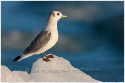 Svalbard -